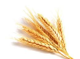 NCDEX Wheat