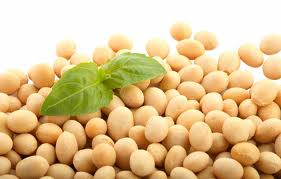 Soybeans & Soyoil to Rise despite larger Soybeans Production